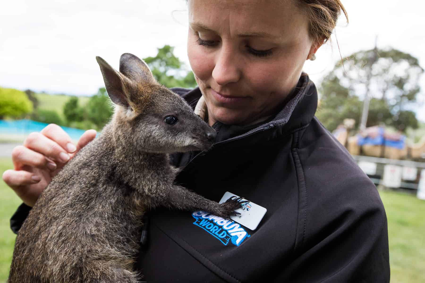 Joey wallaby from Gumbuya World