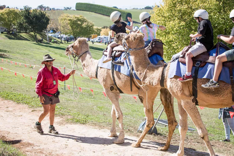 Camel rides at Farm World